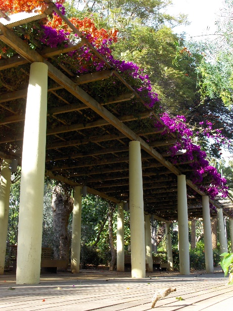 pergola with colorful plants